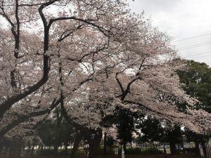 20170408komazawa (5)_s.jpg